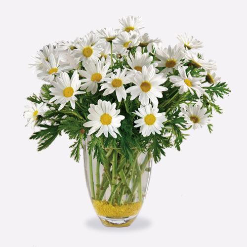 Daisy Daze Floral Arrangement